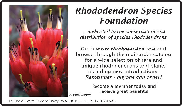 Rhododendron Species Foundation Nursery