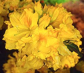 R. 'Nifty Fifty'