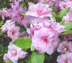 R. 'Rosebud'